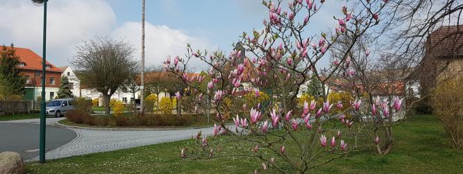 Frühlingserwachen in Mertendorf